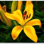 flowers-free-pictures-1 (1038)[6]