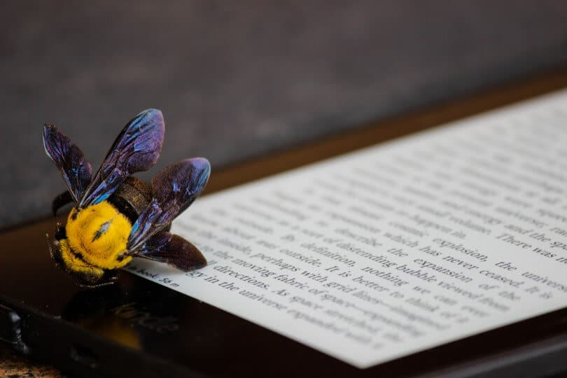 kindl včela