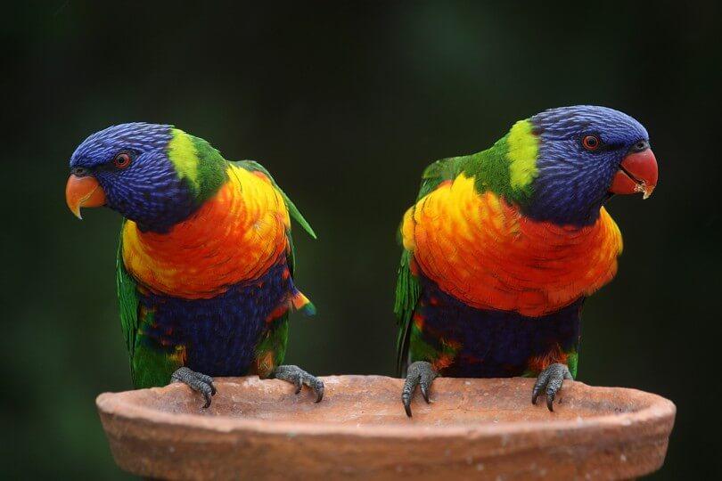 jazyky s papoušky